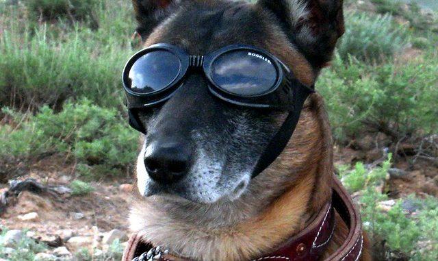 Polizeihund Hundeschuhe